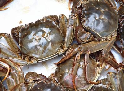 吃完螃蟹不能吃什么 下面这些食物都不能同食