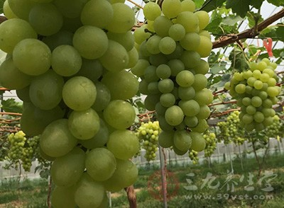 葡萄籽有哪些功效 葡萄籽可以美白吗
