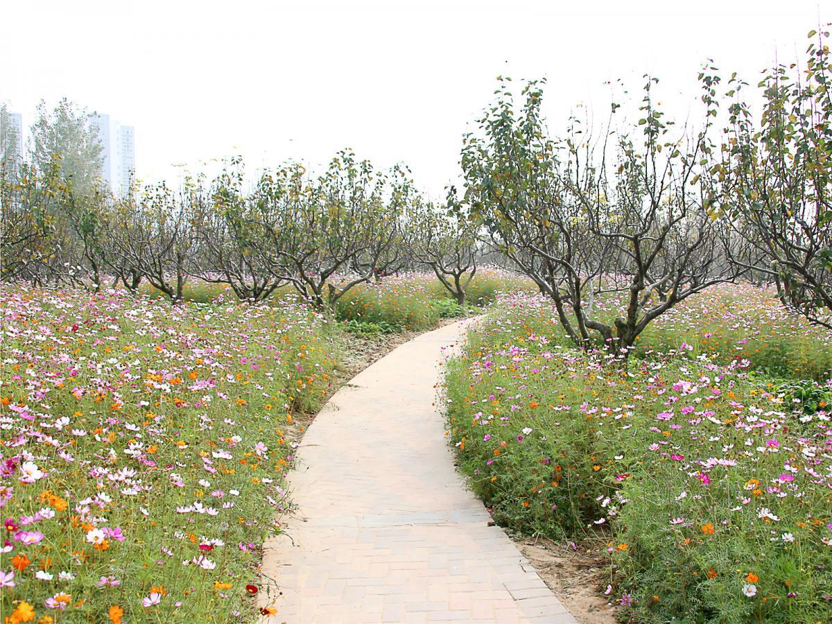 长满鲜花的小路