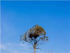 蓝天下的一颗小树