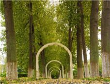 种满杨树的浪漫大道
