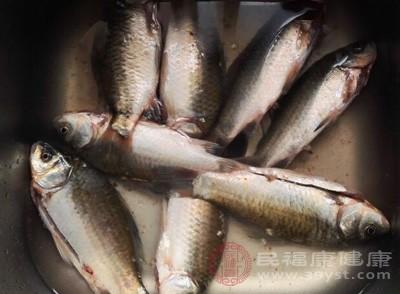 鲫鱼不能和什么一起吃 这些食物要远离鲫鱼