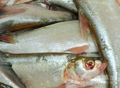清江鱼怎么做好吃 清江鱼有这些功效