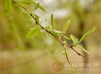 立春節氣 春日春盤細生菜春到人間草木知