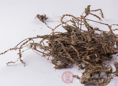 正常人及家兔服车前草种子煎剂则无明显利尿作用