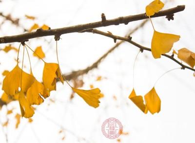 银杏叶是什么 吃它竟有这些好处