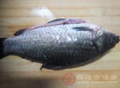 鲫鱼是什么 这几大做法美味至极