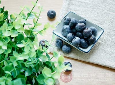 蓝莓的功效与作用 五大功效你知道吗