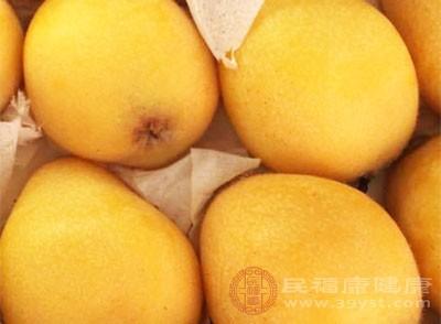 金色的小果子,味道甜中带酸,一走进水果超市,香气浓郁的枇杷一下子能把人吸引住。枇杷的表皮黄而多蜡质,因此又被称为黄蜡丸