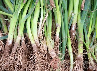 大葱的作用与功效 常吃大葱有五大奇效