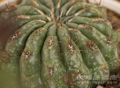 仙人掌的作用 这些因素导致仙人掌不用浇水