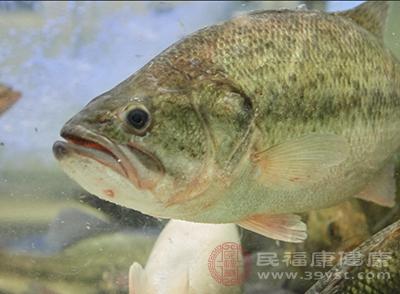 草鱼的功效 草鱼这样吃营养又美味