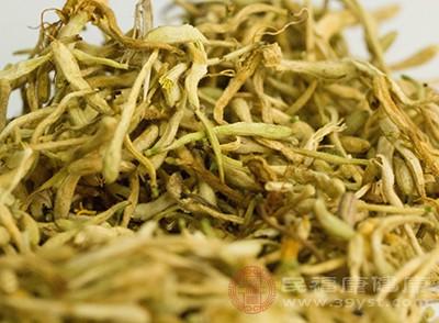 喝金银花茶还可以预防高血脂