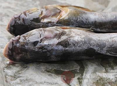 鱼可以为大脑提供优质蛋白质和钙