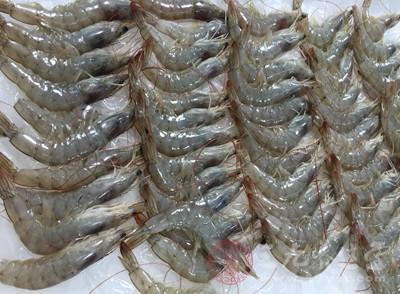 虾的身体结构图
