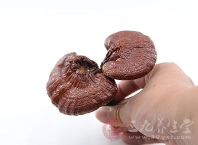 其实灵芝就是多孔菌科真菌灵芝的子实体