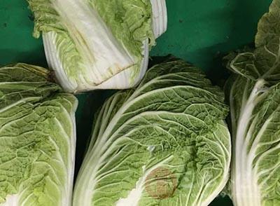 大白菜减肥篇 这样吃白菜让你连瘦二十斤