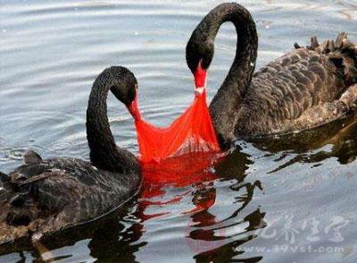⑵抛弃在陆地上或水体中的塑料废弃物,被动物当作食物吞食,导致