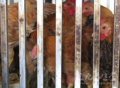台湾又发生一例高致病性禽流感 交叉感染所致
