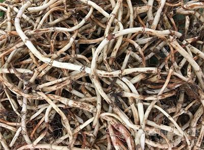 鱼腥草具有润肠通便的作用