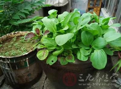 蔬菜储藏中容易产生亚硝酸盐