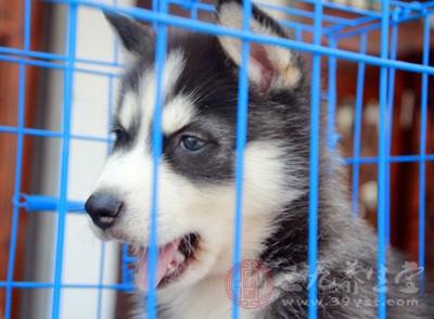 狗咬没出血但有点划痕 应该怎样处理