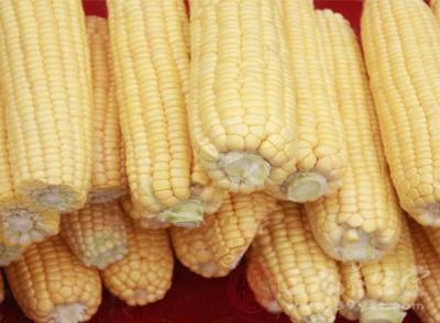 玉米是什么 玉米的做法有哪些