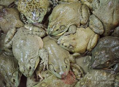牛蛙1只、元葱1段、油40克、酱油适量、冰糖3克、辣椒2个、蒜5瓣、料酒适量