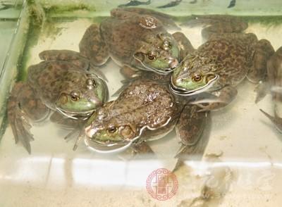 很多朋友都喜爱吃牛蛙,当然也仅仅将之当作一种美味的食物