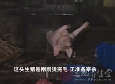 长沙 白板肉私屠窝点藏身桥下被捣毁