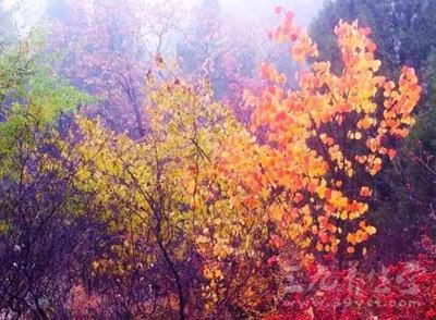 时间已至立秋,在这季节交替之时,人体往往会变得十分脆弱