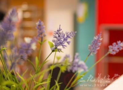 闻香助眠法——摆放有助睡眠的花草、香薰