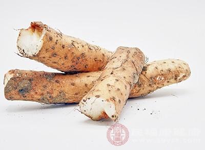 山药的好处 多吃这种蔬菜帮你改善胃部