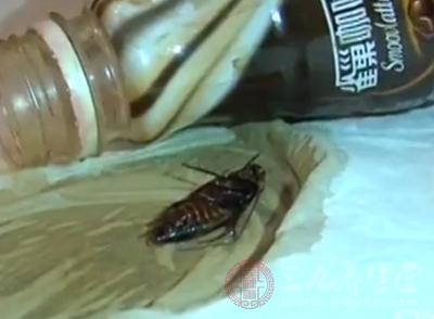 雀巢咖啡瓶中出现蟑螂 厂家回应还需鉴别
