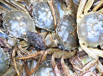 螃蟹的好处 想不到这种食物能提高智力