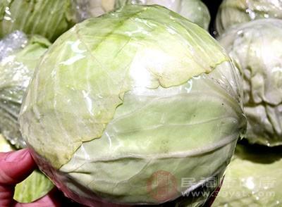 新鲜的卷心菜有杀菌、消炎的作用