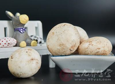蘑菇的营养价值 这4种蘑菇竟是抗病良药
