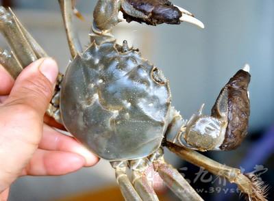 螃蟹和花生同时进食的话易引起腹泻的现象