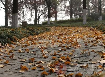 秋分吃什么 秋分吃這些補水潤肺保健康