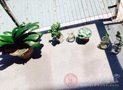 家里放什么植物好 家里摆放植物竟带来这变化