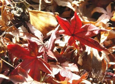 秋季进补如何才能奏效 这些一定要记住