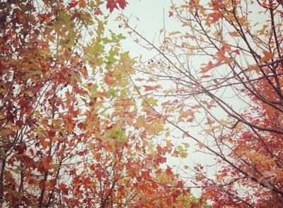 秋季如何养生 养生小常识你知道吗