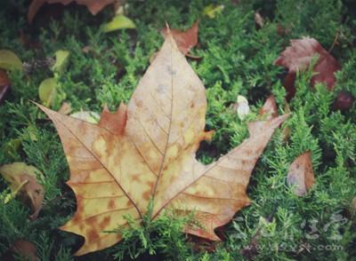 秋天是一个很适合养生的季节
