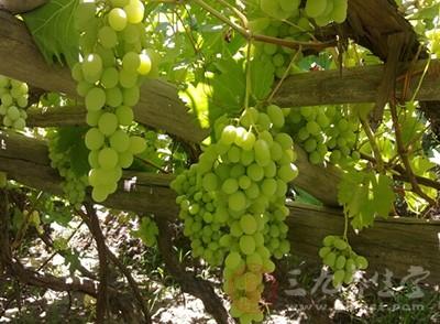 糖尿病能吃葡萄吗