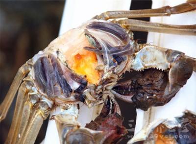 不要和海鲜同吃