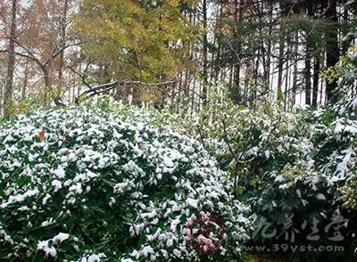 大雪節氣吃什么 大雪節氣養生攻略