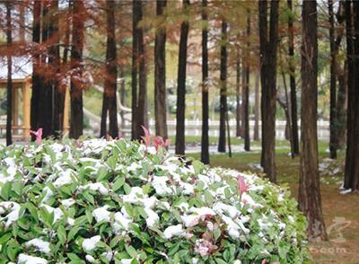大雪節氣養生原則 大雪補脾勝過養生