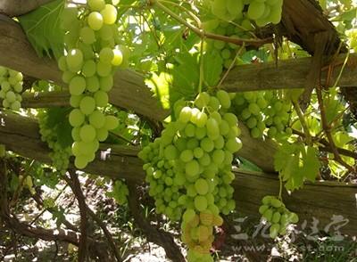 葡萄酒的制作方法 葡萄酒的功效有哪些