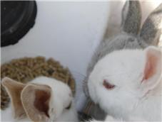 可爱的小兔子特写