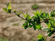 绿树成荫的植物观赏